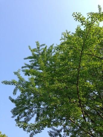 summer-tree